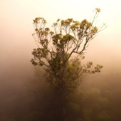 Photographer Steven Pearce captures a breathtaking image of the world's tallest flowering plant.