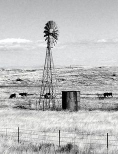 windmill and grazing cattle - this reminds of the many years we had windmills on the ranch. Country Farm, Country Life, Old Windmills, Windmill Decor, Country Backgrounds, Western Photography, Sierra Vista, Ranch Life, Le Far West