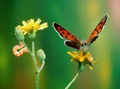 Afbeeldingsresultaat voor vlinders bij zonsondergang