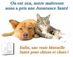 Assurance Santé Animaux Zen