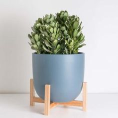 Costa Farms Pilea Peperomioides Sharing Plant in 6 in. Contemporary Planter-6PILEACONTEMP - The Home Depot Indoor Plant Pots, Indoor Planters, Ceramic Planters, Metal Raised Garden Beds, Contemporary Planters, Diy Hanging Planter, Indoor Trees, Fiberglass Planters, Wood Plant Stand