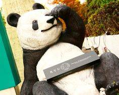 """Panda also loves """"RYU""""! Is he going to cook bamboo leaves?  #chefknife #chefstuff #kitchenstuff #kitchentools #kitchenknife #kitchenware #kitchenset #kitchenstyle #cheflife #kitchenlife #chefs #chefstalk #cheftable #chefstyle #chefskills #chefsgallery #chefschoice #chefkitchen #cutlery #knives #culinary #homecooking #knifesale  #culinaryarts #chefsoninstagram Kitchen Knives, Kitchen Tools, Chef's Choice, Bamboo Leaves, Professional Chef, Chef Knife, Kitchen Sets, Culinary Arts, Cutlery"""