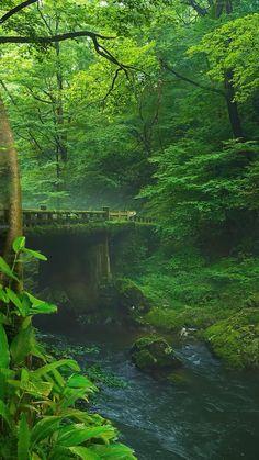 Beautiful Photos Of Nature, Beautiful Nature Wallpaper, Beautiful Places To Travel, Nature Photos, Amazing Nature, Beautiful Landscapes, Beautiful Forest, Beautiful Waterfalls, Landscape Photography