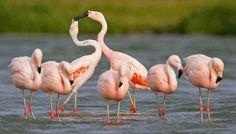 flamingos - Google Search
