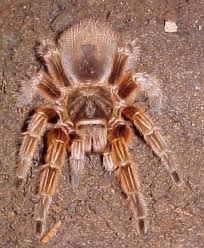 held a tarantula Funny Animal Pictures, Funny Animals, Animal Pics, Spiders, Insects, Puppies, Big Cats, Toy, Animales