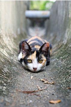 mostlycatsmostly: Un gatto versa il suo corpo sul pavimento come l'acqua - William Lyon Phelps (via Chan Foo)