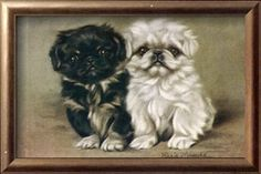 Black and a White Pekingese Puppy print