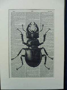 Stag Beetle Wall Print on vintage dictionary by DecorisDesigns