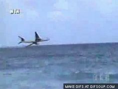 airline crash gifs - Google Search
