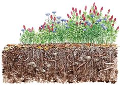 I really like this illustration. Building healthy soil is what farming, gardening or raising healthy animals is all about.