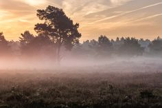 "Backlit Meadow - <a href=""https://www.facebook.com/jurgencornelissenfotografie"">FACEBOOK</a> - <a href=""https://twitter.com/JuCoFotografie"">TWITTER</a> - <a href=""https://www.instagram.com/jurgencornelissen25021985/"">INSTAGRAM</a>{English/Engels} It doesn't always go your way, you have a composition in mind, get to your location and it's just not working. So you quickly look for something else. You get to this scene, but the light is already at its best. As fast as you can you set up your…"