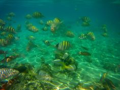 snorkling Recovery, Pets, Painting, Animals, Cuba, Animales, Animaux, Painting Art, Paintings