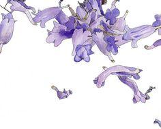 Purple Jacaranda, Eco-Friendly Print, 8x10. $22.00, via Etsy.