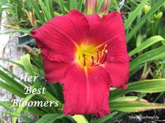 Her Best Bloomers photo by HappyGoDaylily