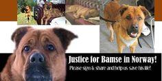 SandRamirez contra el maltrato animal. • www.luchandoporellos.es: JUSTICIA PARA BAMSE [NORUEGA].