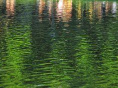 Vondelpark, Asmterdam: reflections of people in a pond