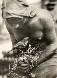 Blackbird nesting in the folded arms of a statue in a graveyard in Berlin, Germany 1932