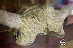 Sometimes, the distinction between graffiti and history is tenuous. This skull was signed by many of Montana's notable figures back in 1913 including the celebrated western artist, C. M. Russel.