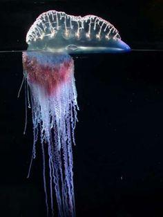 2ff96d8e613a0af5d216846d8b6badb9--tentacle-medusa.jpg (394×525)