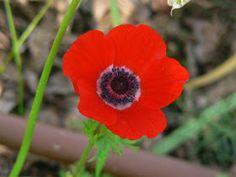 The Organic Gardener: List of Autumn Flowers