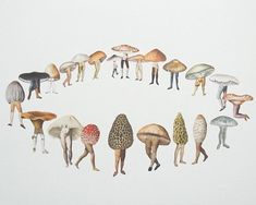 Mushroom circle of life Mushroom Circle, Mushroom Art, Fairy Ring, Photocollage, Gravure, Fungi, Art Inspo, Moose Art, Stuffed Mushrooms