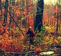 15 Incredible Bigfoot Sightings of the Century (with Map) Real Bigfoot, Finding Bigfoot, Bigfoot Sasquatch, Bigfoot Footage, Bigfoot Pictures, Pie Grande, Maine, Baxter State Park, Bigfoot Sightings