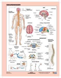 Biotechnology, Medical, Bullet Journal, Study, Science, Teaching, Education, School, Bodies