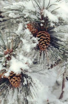 Атмосфера уютной зимней сказки (59 фото)