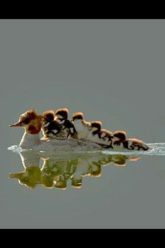 These funny animals pics) Pretty Birds, Beautiful Birds, Animals Beautiful, Cute Baby Animals, Animals And Pets, Funny Animals, Photo Animaliere, Tier Fotos, Amazing Nature
