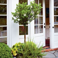 Plant Fragrance by the Door | The sweet aroma of gardenia is ideal for an entry, where people tend to linger and they can enjoy the scent. Here it is underplanted with rosemary and heuchera. | SouthernLiving.com