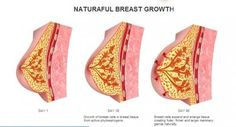 Are you looking perfect shape breast? You need to use natural & best breast enlargement cream make your breast firmer & lifted, Check This Out Here!