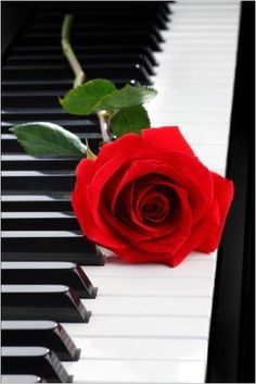 Red rose on piano. Red rose on black piano , Music Wallpaper, Rose Wallpaper, Love Rose Flower, Piano Art, Stylist Tattoos, Red Aesthetic, Beautiful Roses, Cute Wallpapers, Aesthetic Wallpapers