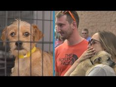 Family adopts dog to be euthanized without seeing him, lose it when they meet for the first time - Animal Lovers News