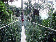 Canopy_Walk.jpg (2048×1536) & Canopy (biology) - Wikipedia the free encyclopedia | Hugging ...