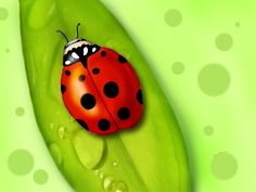 Ladybug HD Wallpapers Backgrounds Wallpaper  Page