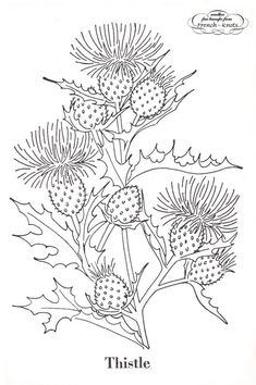 vintage embroidery patterns | Poppies, Thistles and Goldenrod Flowers Embroidery Transfer Pattern #vintageembroidery #VintageEmbroideryPatterns