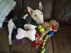 Our beautiful little girl Boo with some new toys :)