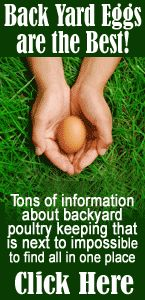 i want to do this for home fresh eggs!! :) how to raise chickens in your backyard   How To Raise Chickens – First Steps!