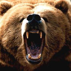 Meet your Take the real, fun & accurate Spirit Animal Quiz, now! Spirit Animal Quiz, Bear Spirit Animal, Bear Tattoos, Animal Tattoos, Baby Animals, Funny Animals, Cute Animals, Wild Animals, Baby Pandas