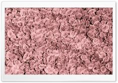 Vintage Pink Roses Tumblr HD Wide Wallpaper for Widescreen