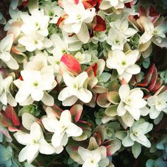 Pretty flower that took my breath away