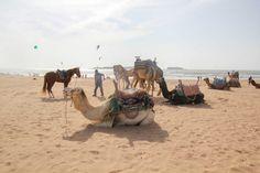 Travel Guide to Essaouira Agadir, Surf Cafe, Game Of Thrones, Riad, Cozy Cafe, Blue City, Morocco Travel, Surfer, Seaside Towns