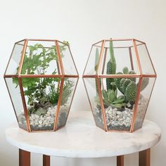 Available from Target in September. Just not sure what to plant in them that can handle low-ish light.