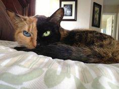 Meet Venus, the cat with two faces - @quavebal