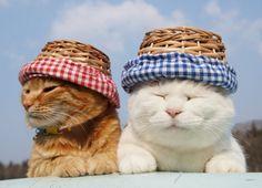 かごぼうし |のせ猫オフィシャルブログ Powered by Ameba