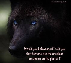SAVE THE WOLVES - photo courtesy of Wolf Mountain Sanctuary.