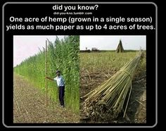 Hemp. Doing more than you think.
