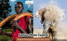 Nature Photographer of the Year 2016 by National Geographic. Read full article: http://webneel.com/photography-contest-competition-sep17 | more http://webneel.com/photography-news | Follow us www.pinterest.com/webneel