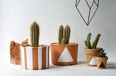 Vaso Terracota + cactos e suculentas