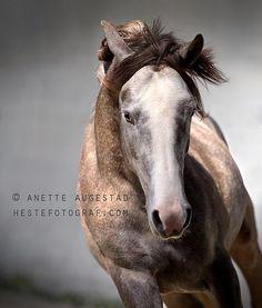 Hestefotograf.com - Equine Photographer | Horses 1